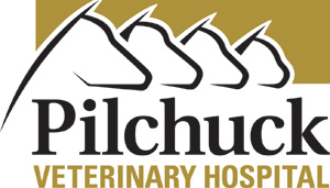 pilchuck veterinary service