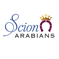 scion arabians