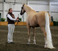 region5show half arab inhand