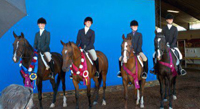 region5show horses with ribbons